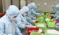 Thiếu vỏ container ảnh hưởng xấu đến việc xuất khẩu tôm