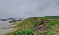 Tàu của Cty Tự Lập ồ ạt khai thác cát sát bờ đê, đe dọa an toàn đê điều ở xã Sông Lô, TP Việt Trì. Ảnh: Tuấn Nguyễn