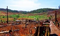 Phá rừng lập làng di cư tự do ở Đắk Nông