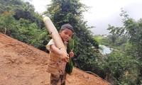 Cậu bé Hồ Ánh Khiết vác búp măng tre lội bộ nửa giờ đồng hồ đến điểm tiếp nhận thực phẩm ủng hộ chống dịch