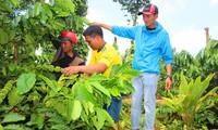 Nông dân cần hỗ trợ vốn tái canh cà phê