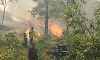 Gần 10 ha rừng thông của người dân Thanh Hóa bị thiêu rụi