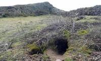Nhiều cổ vật giá trị xuất hiện ngay trước hang thỏ trên Skokholm .