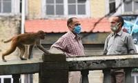 Khỉ trộm cướp đang là vấn đề khiến giới chức New Delhi đau đầu