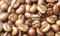 Toàn cảnh quy trình sản xuất cà phê bán tự động ở Brazil