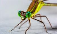 Top 10 loài động vật có đôi mắt độc đáo nhất thế giới