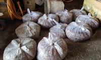 Số vảy cá được người dân đựng trong túi nilon để bán. Ảnh N.H