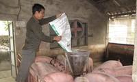 Giá thịt lợn tiếp tục lập đỉnh giá mới, lợn hơi đã xấp xỉ 100 nghìn đồng/kgẢnh: Bình Phương