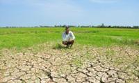 Nông dân trước cánh đồng khô cằn ở Sóc Trăng ẢNH: HÒA HỘI