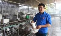 Anh Nguyễn Thế Dũng trong khu nuôi bồ câu Pháp mới triển khai