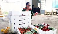 Kiểm đếm dâu tây nghi từ Trung Quốc nhập lậu vào Đà Lạt