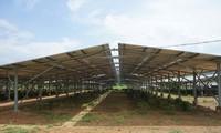 Dự án NLMT trá hình nông nghiệp công nghệ cao