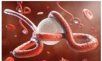 Virus Ebola lại bùng phát trở lại tại châu Phi,
