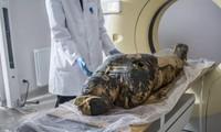 Qua chụp X- quang và CT, các nhà nghiên cứu phát hiện ra rằng, xác ướp này mang thai.