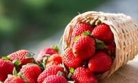 Nhiều nghiên cứu đã chỉ ra lợi ích to lớn của loại quả mùa hè này với sức khoẻ, bao gồm cả việc giảm cân. Ảnh minh hoạ: Internet
