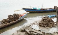 Những vỏ lốp bám đầy con hàu vớt lên từ đầm Lập An trông ghê người.