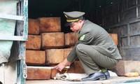 Xe tải chở gỗ lậu ngụy trang dưới các bao phế liệu