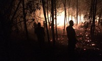 Cháy dữ dội tại khu vực rừng trồng ven biển xã Bình Hải, huyện Thăng Bình, Quảng Nam.