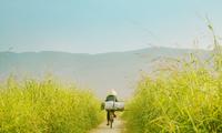 Ngắm bộ ảnh làng quê miền Trung đẹp tựa thước phim điện ảnh của chàng trai 9X