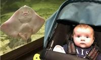 """""""Nhân vật"""" kỳ lạ xuất hiện trong bức ảnh cô bé 6 tháng tuổi, lại còn có vẻ mặt giống y hệt"""