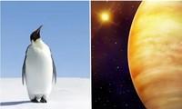 Không phải tìm đâu xa, chim cánh cụt có lẽ chính là sinh vật hành tinh khác đến Trái Đất?