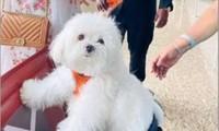 Ấn Độ: Một người thuê nguyên khoang hạng thương gia để cún cưng đi máy bay được yên tĩnh