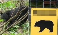 """Đang đi làm thì bị gấu tấn công, cụ ông 75 tuổi ở Nhật quát gấu: """"Mày là đứa nào thế hả?"""""""