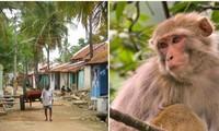 """Chuyện hài hước: Chú khỉ siêu quậy ở Ấn Độ tự """"bắt"""" xe tải đi 22km từ rừng về làng"""