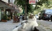 Chú mèo hoang được dựng tượng đồng