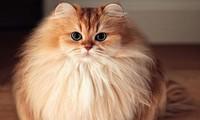 Chú mèo ăn ảnh nhất thế giới