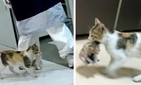 Mèo mẹ đem mèo con vào phòng cấp cứu