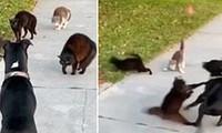 Đội mèo đường phố can đảm