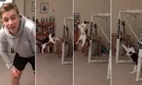 Chú mèo bắt gôn