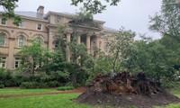 Nhiều cây cổ thụ đổ