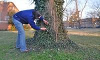 Kiểm tra cây cối