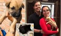 Mexico: Sự thật kinh hoàng về cặp đôi tốt bụng thường nhận nuôi chó con bị bỏ rơi