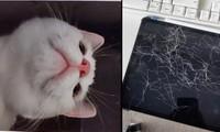 Để quên iPad ở nhà, khi về thì phát hiện ra em mèo cưng đã chụp hàng chục bức ảnh selfie