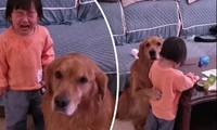 Chú chó bảo vệ cô bé bị mẹ mắng dễ thương thế này, tại sao lại bị cộng đồng mạng nghi ngờ?