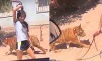 Người đi đường phát hoảng khi một cô bé dẫn hổ đi dạo, còn khoe ở nhà mình có con hổ nữa