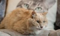 Chú mèo bỏ nhà đi sau ngày chủ mất, đúng 3 năm sau lại tự quay về vào thời điểm đặc biệt