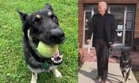 """Chó cưng của ông Joe Biden đăng """"tâm thư"""" xin lỗi vì khiến ông bị thương, ai cũng bật cười"""