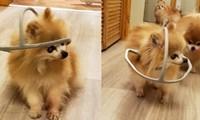 """Chú chó được chủ làm cho chiếc """"mũ bảo hiểm"""" kỳ lạ, nhưng ai cũng xúc động khi biết lý do"""