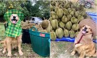 """""""Chủ"""" sạp trái cây dễ thương nhất thế giới: Đi mua sầu riêng, được khuyến mãi nụ cười duyên!"""