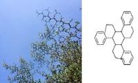 """""""Dân chơi"""" hệ Hóa học: Chỉ nhìn cái cây thôi mà cũng ra... mạch Cacbon"""
