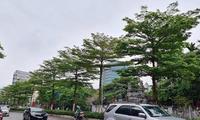 Vụ thổi giá cây xanh ở Hà Nội: Khởi tố, bắt tạm giam thêm 4 bị can