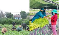 Giãn cách không cách lòng: Đắk Lắk gửi 13 tấn rau, y bác sĩ Nghệ An sẵn sàng hỗ trợ TP.HCM
