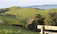 """Bài dự thi """"New Zealand - Bật mí trăm điều thú vị"""": Tháng 10 - mùa cỏ nở hoa và ấn tượng New Zealand của tớ"""