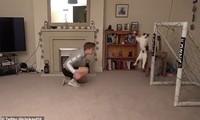 Chú mèo gây sốt với tài năng bắt bóng hơn cả... thủ môn Neuer