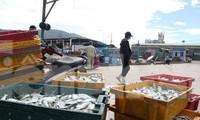 Cảng cá lớn nhất miền Trung ra sao trước giờ đóng cửa?
