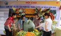 Hội chợ cam, bưởi huyện Lục Ngạn, Bắc Giang